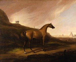 Harris - Napolean's horse