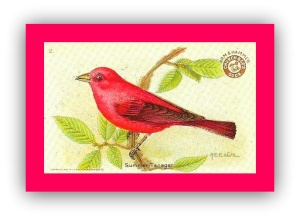 Summer tanager.GIF