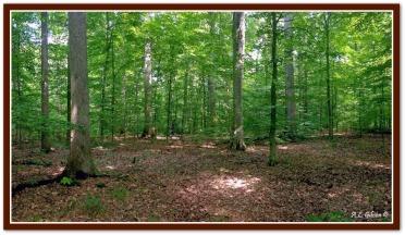 Ohio woods