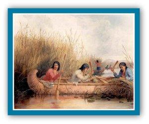 rice-gatherers